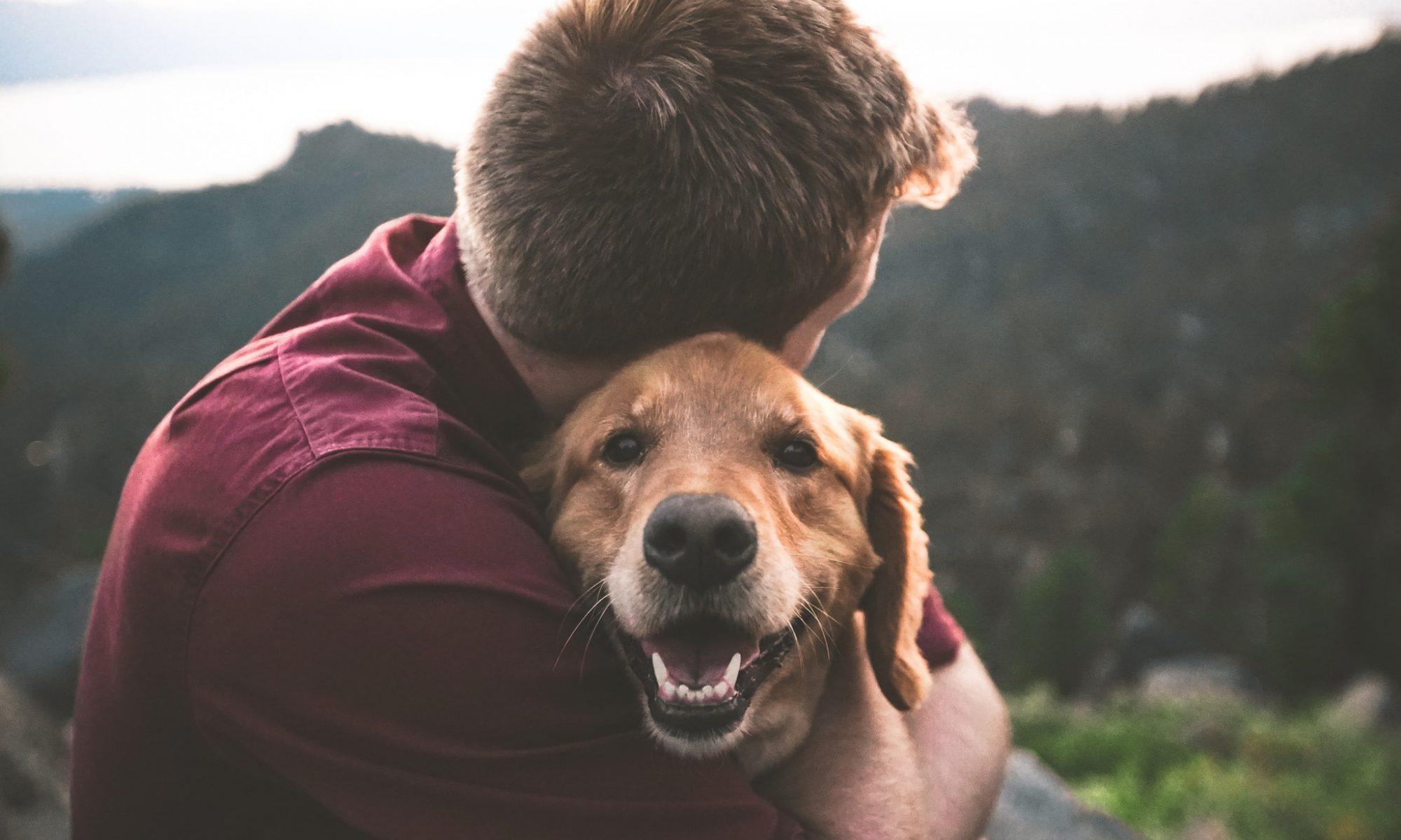 Hunden - människans bäste vän